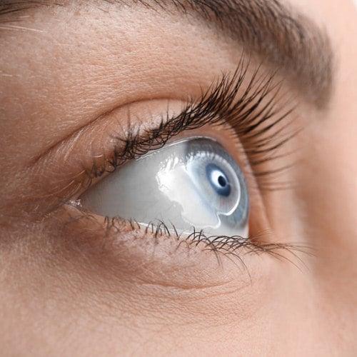 Alles was man über Wimpern wissen muss